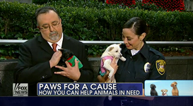 SEAACA Paws for a Cause Fox Report